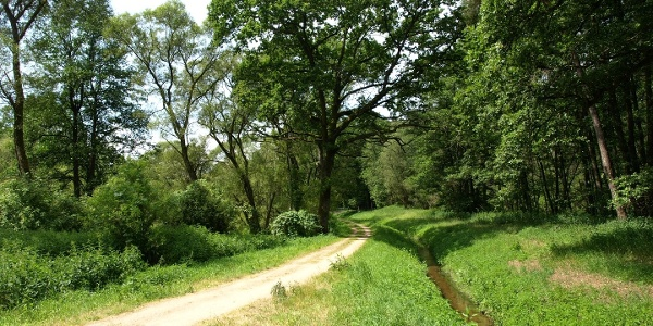 Weg bei den Krugsweihern