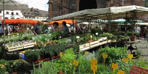 Markt auf dem Münsterplatz.