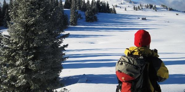 Hochalm mit Blick zum Gipfel der Wildalpe