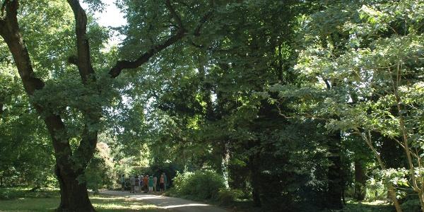 A Szelestei Arborétum