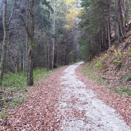 Kleiner Buchwaldweg