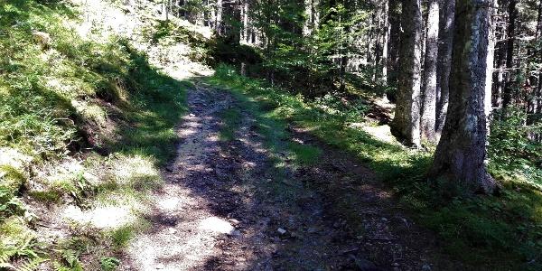 Eindrücke vom Aufstiegsweg zur Mödlinger Hütte I