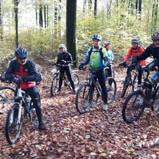 Im Wald bei Leideneck
