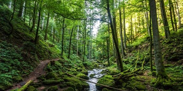 Ein schmaler Wanderpfad führt direkt am Monbach entlang