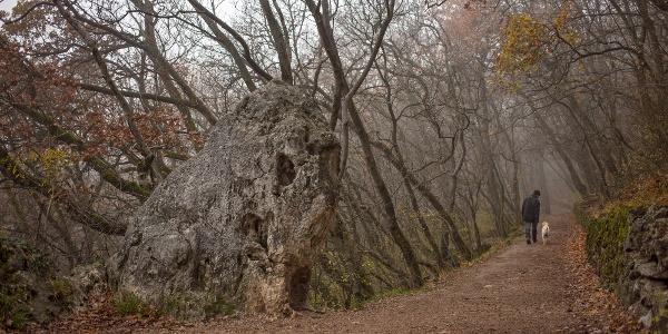 Skala Oroszlán-szikla na jeseň, v hmlistom počasí