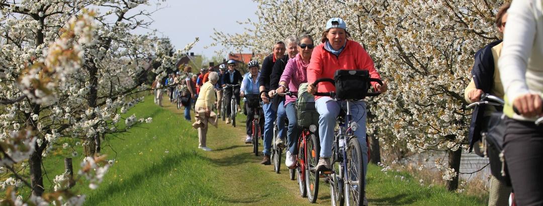 Radfahrer auf dem Este-Deich bei Buxtehude