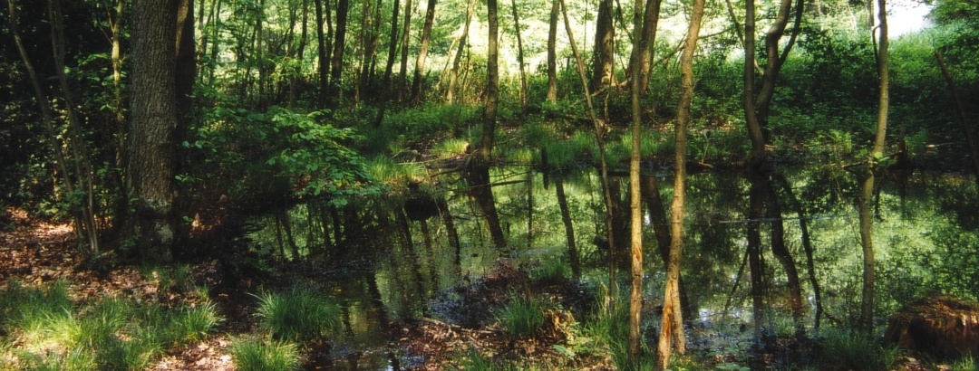 Der Wupperverband bewirtschaftet an seinen Talsperren rund 1000 Hektar Wald