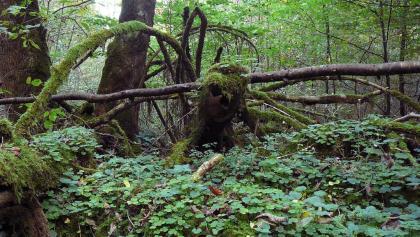 Wildnispark Zuerich Sihlwald