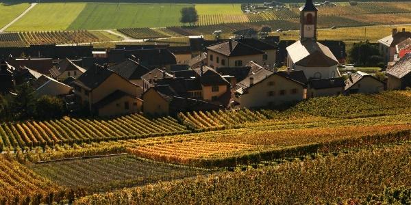 Das Weindorf Yvorne liegt mitten in den Rebbergen.