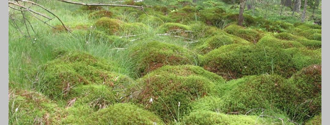 Lichtenwalder Moor in Hohenbrugg