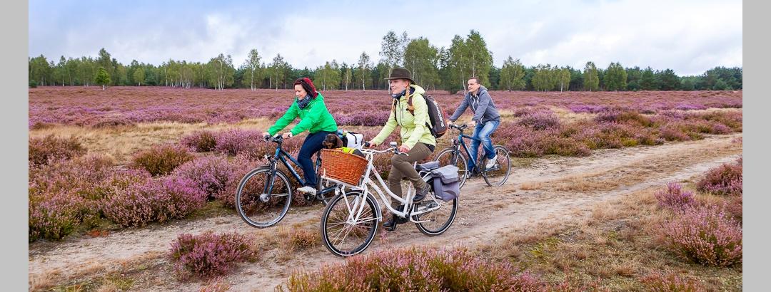 Fahrradtour durch die Heidelandschaft
