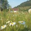 Blumenwiese in Königheim