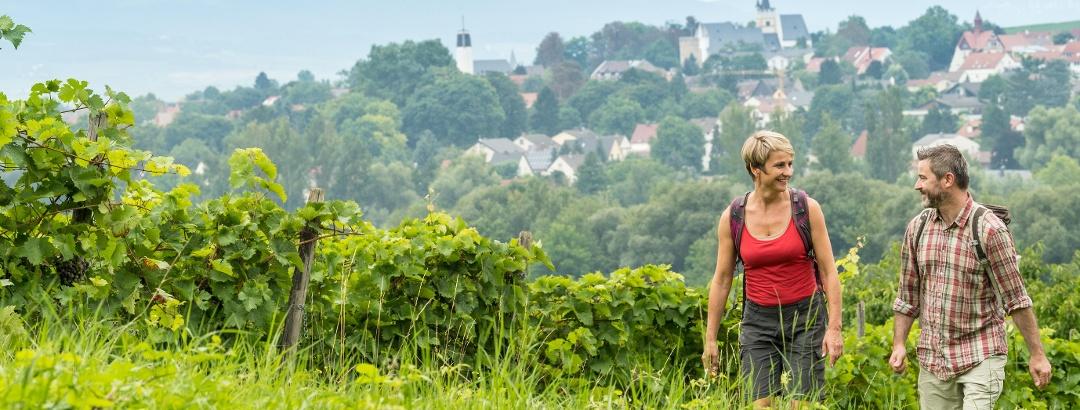 Aussicht auf Ingelheim