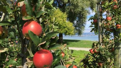 Äpfel und der Bodensee – Die Markenzeichen des Thurgaus.
