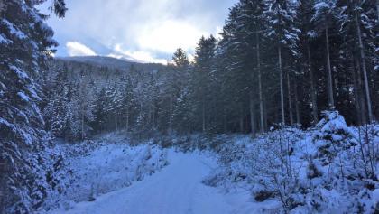 Verschneite Rodelbahn