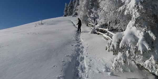 Schneeschuh-Runde am Brandkogel_Aufsteig am sommerlangen Zaun