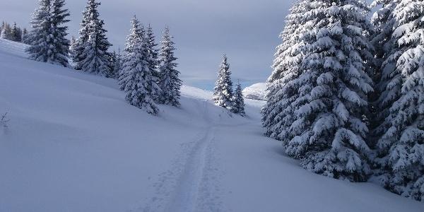 Kurze Schneeschuhrunde auf der Stubalm_Weg Richtung Zapfelhütte