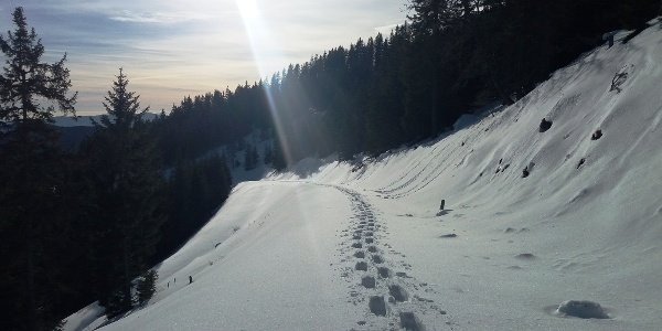 Unberührte Gaberl-Runde: Am Fuße des Ofnerkogels