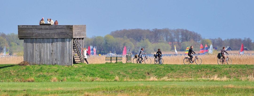 Radfahren am Dümmer-See