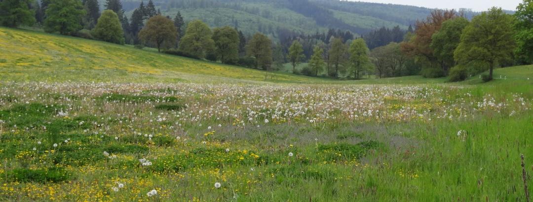 Blick Richtung Rohrbachtal