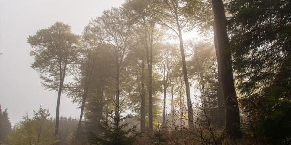Die Sonne bricht durch den Nebel am Rothaarsteig