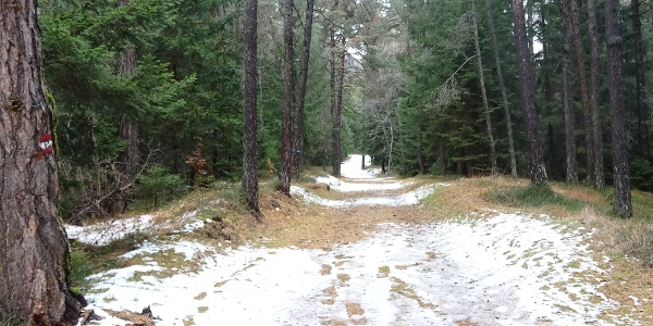 Nice and large trail through the forest