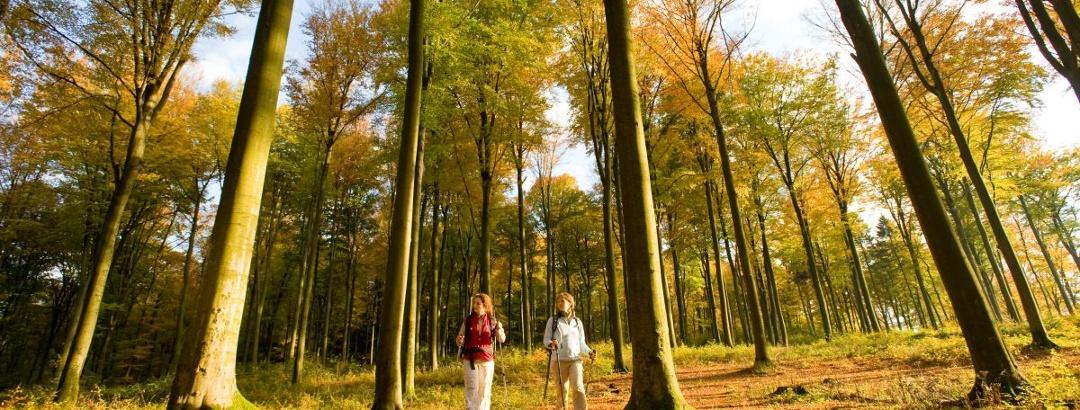 Der Westerwald zeigt sich im Herbst farbenfroh