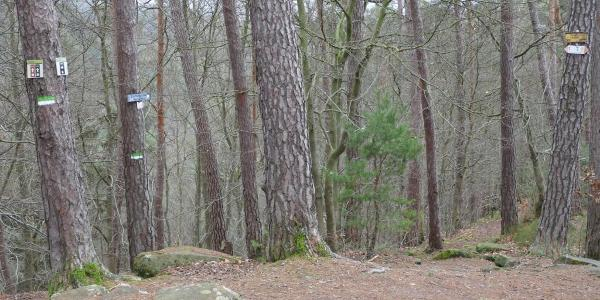 An dieser Stelle bietet sich ein Abstecher zur 400 m entfernten Burgruine Neidenfels an.