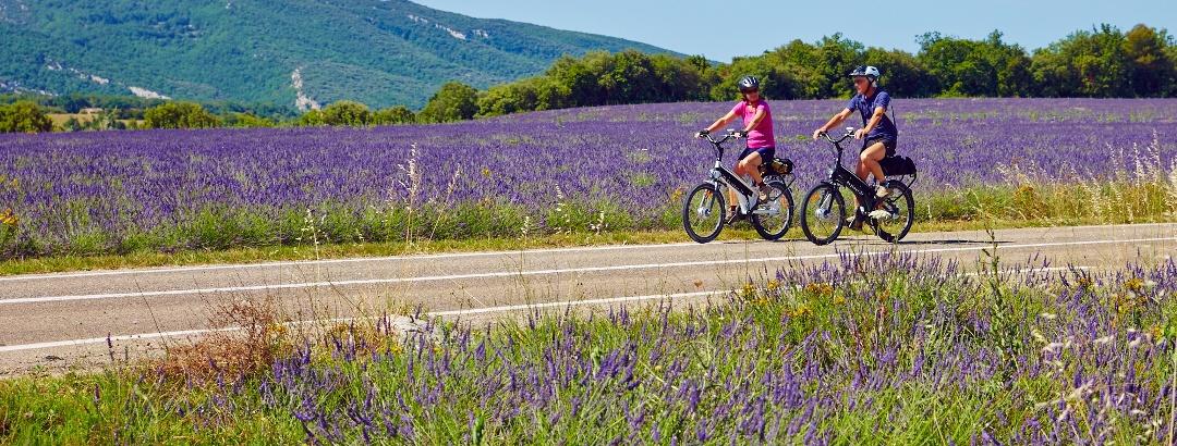 Durch die Lavendelfelder des Plateau des Claparèdes