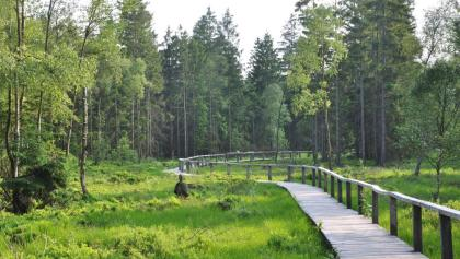 Steg durch das Hochmoor Mecklenbruch im Forstamt Neuhaus