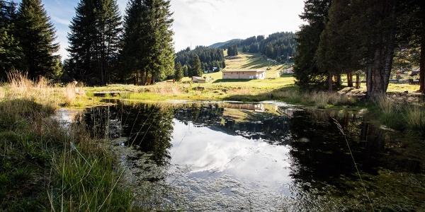Moor Riedboden/Brambrüesch