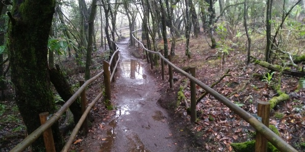 Regenwald La Gomera Nationalpark Garajonay