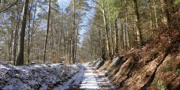 Der Riesenbergweg als Hohlweg