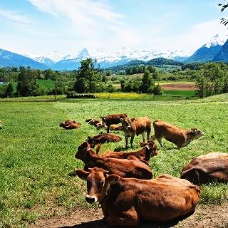 Grüne Wiesen und Ausblick auf Eiger, Mönch und Jungfrau