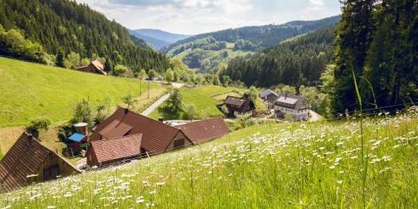 Der Wiesensteig im Frühling, üppig blühende Bergwiesen