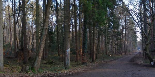 Waldweg Panoramabild - diese Schutzhütte existiert leider nicht mehr ...