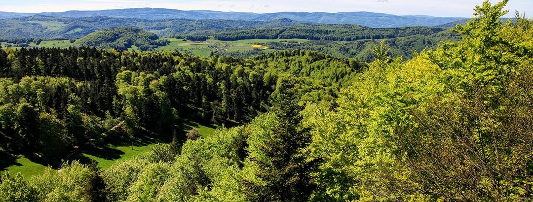 Rundumblick vom Turm auf dem Remelberg