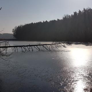 Karpfenweiher im morgendlichen Sonnenlicht