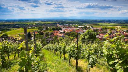 Das Weinstraßennetz