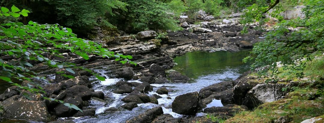 Im Naturschutzgebiet Les Goudebas.