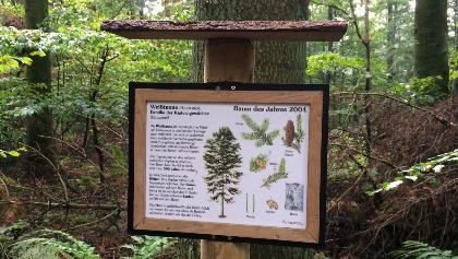 Waldlehrpfad Silberbergen