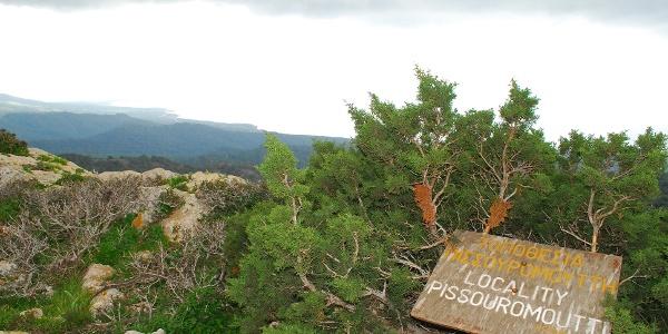 Pissouromoutti (400 m)