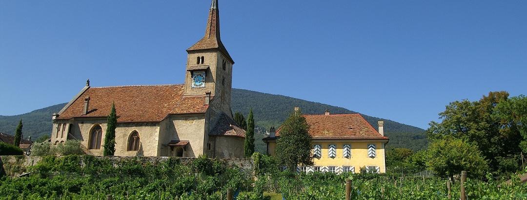 Weinberge und Dorfkirche in Concise