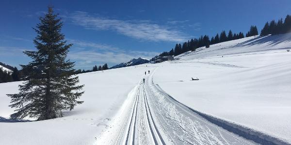 Anstieg zum Berggasthof Hochwies