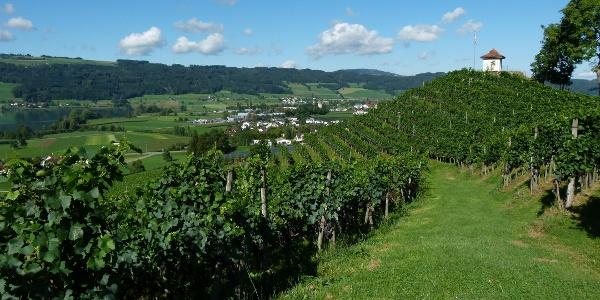 Seetal: Wandertipp Nr.3 Hitzkirch - Horben - Lieli - Hitzkirch
