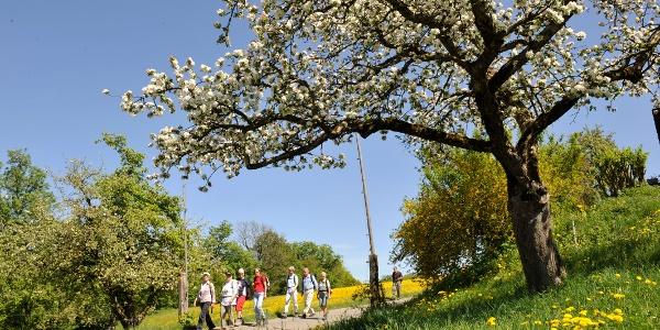 Blühende Obstbäume säumen im Frühling die Tour.