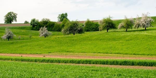 Die Tour zeigt das klassiche Bild des Thurgaus: weitläufige Streuobstwiesen.