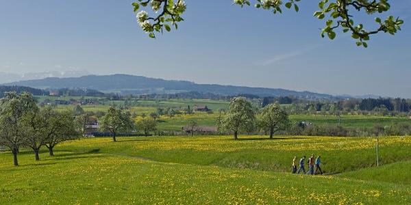 Eine Wandergruppe in typischer Thurgauer Landschaft.