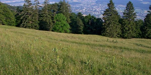 Blick vom Wanderweg ins Mittelland.