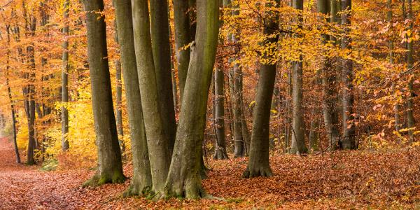 Herbst am Laacher See